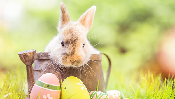 easter egg hunts in boise