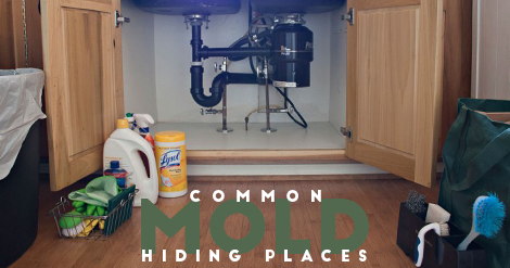 Common Mold Hiding Places